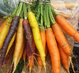 carrotsbunched